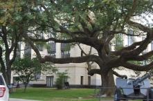 I love this big ole oak in my hometown